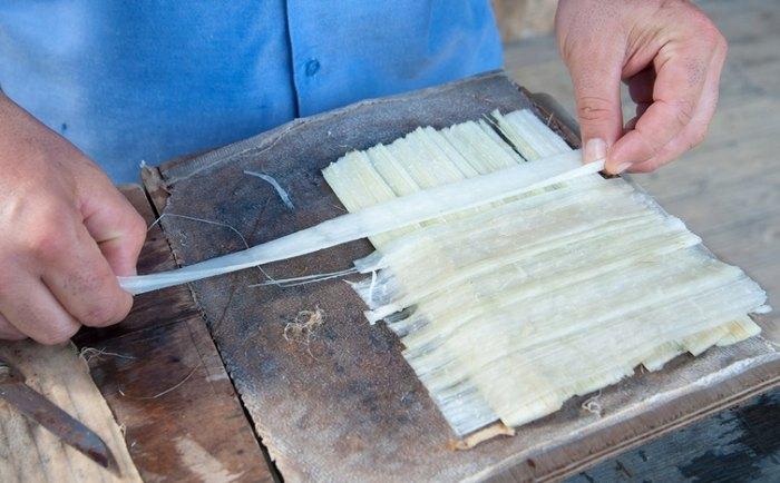 из чего делают папирус